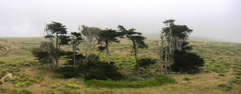 Lower Pierce Point Ranch, Pt. Reyes