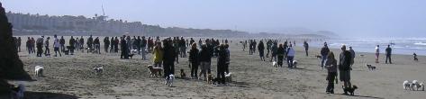 Small Dog Army, Ocean Beach