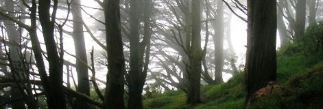 Golden Gate Heights